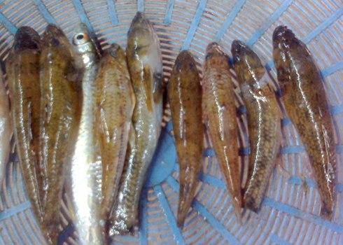 2013 06 20.07.19.48 2 Ẩm thực miền Trung :Những món cá đặc sản của miền Trung