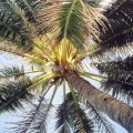 Khám phá ẩm thực ở xứ dừa Bến Tre 1