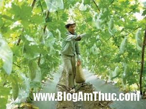 cachluachonvaruaraucutuoideloaikysinhtrung 2b826 300x225 Cách lựa chọn rau củ quả phù hợp tiêu chuẩn an toàn vệ sinh thực phẩm