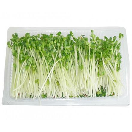 hwn1389157165 Chế biến nấm và rau mầm đúng cách