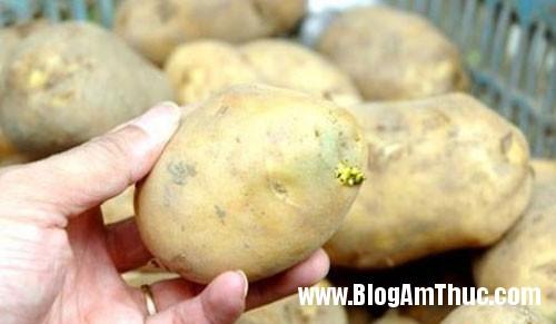 mat ca tram khoai tay moc mam cuc doc Cách chọn và bảo quản khoai tây