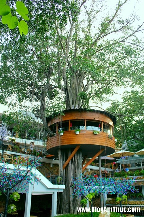 Quan ca phe tren cay doc dao nhat Sai Gon1 Thưởng thức cà phê trên cây cổ thụ ở Tphcm