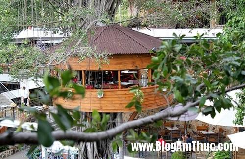 Quan ca phe tren cay doc dao nhat Sai Gon2 Thưởng thức cà phê trên cây cổ thụ ở Tphcm