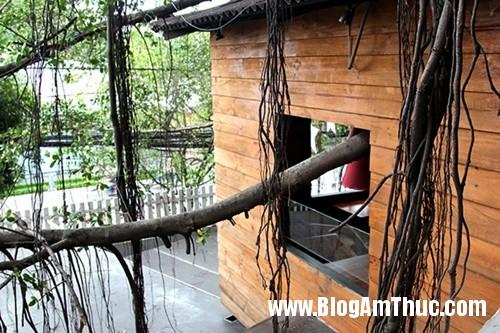Quan ca phe tren cay doc dao nhat Sai Gon8 Thưởng thức cà phê trên cây cổ thụ ở Tphcm