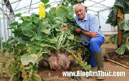 cucai39kg1 Củ cải Thủy Điển nặng tới 38,92kg