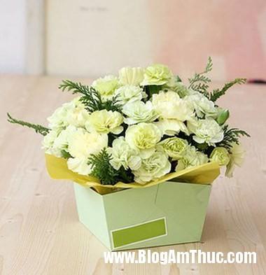 Cam hoa cam chuong voi hop giay that dep 6 Làm hộp cắm hoa cẩm chướng bằng giấy thật xinh