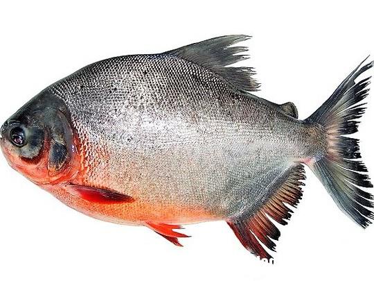 cach lam ca chim nau ngot mon an giai nhiet ngay he 1 Cách để làm cá chim nấu ngót, món ăn giải nhiệt ngày hè