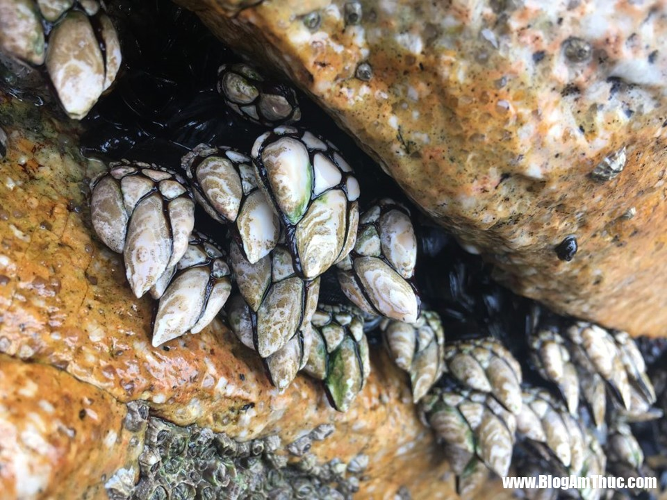 zing 0 Đằng Hồ là loại ốc gì mà đắt và hiềm đến thế?